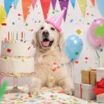What should I get for my dogs birthday